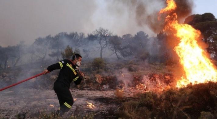 Μεγάλη φωτιά και στη Ζωφριά- Επί τόπου ισχυρές πυροσβεστικές δυνάμεις