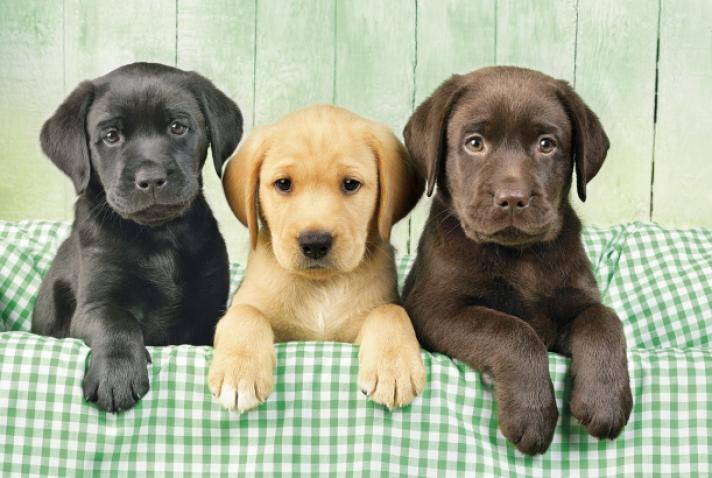 Οι σκύλοι… μυρίζουν τον κορωνοϊό (Video)