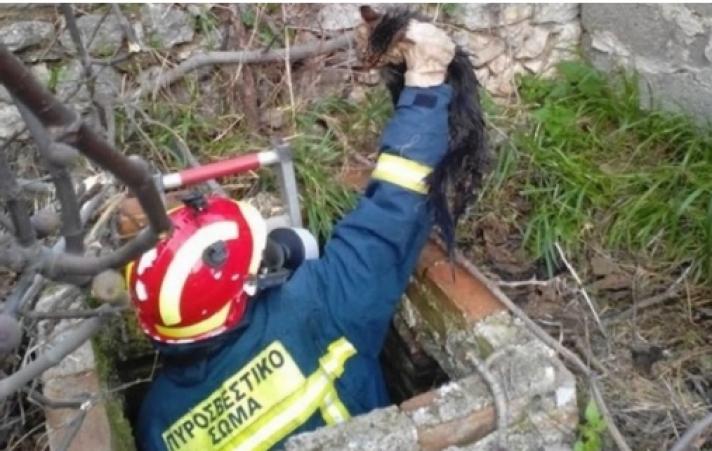 Πυροσβέστες απεγκλώβισαν αδέσποτο γατάκι από ακάλυπτο πηγάδι στην Κερατέα