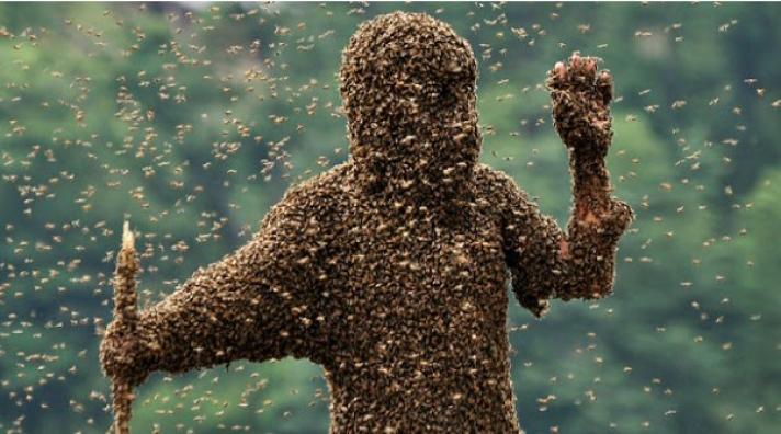 «΄Ερχεται το τέλος της μέλισσας και του μελιού», φοβούνται οι μελισσοκόμοι της Ελλάδας