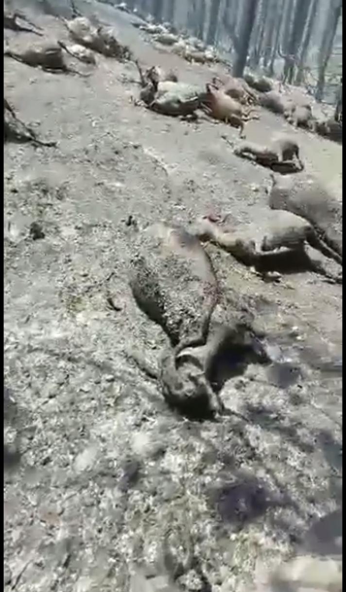 Η φρίκη του Κομμένου στην Εύβοια! (Video)
