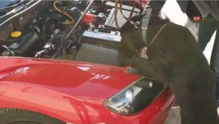 Ο «Άτλαντας» μυρίστηκε την ηρωίνη, που ήταν μέσα στην μπαταρία του αυτοκινήτου!