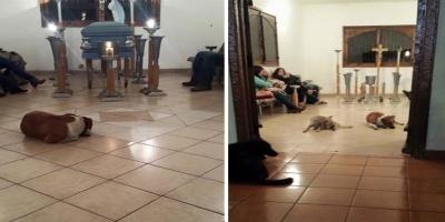 Αδέσποτοι σκύλοι εμφανίστηκαν στα ξαφνικά στην κηδεία της γυναίκας που τα τάϊζε..Βιντεο
