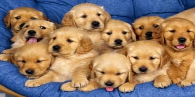 ΘΑ ΠΑΘΕΤΕ ΠΛΑΚΑ !!!Αυτά είναι τα 9 απίστευτα πράγματα που διαισθάνονται τα σκυλιά!