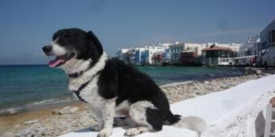 Συνεχίζεται η περίθαλψη αδέσποτων ζώων στον Δήμο Μυκόνου
