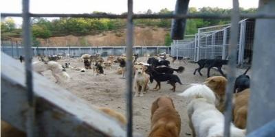Καταδικάστηκε ο υπάλληλος του κυνοκομείου Σερρών που θανάτωσε και έκαψε δύο σκυλιά