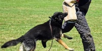 Βόλος: Σε κρίσιμη κατάσταση 30χρονος που δέχθηκε επίθεση από σκύλο